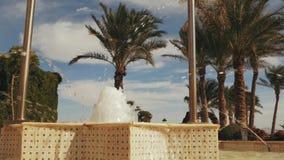 在棕榈树附近的喷泉 与云彩的美丽的蓝天 股票视频