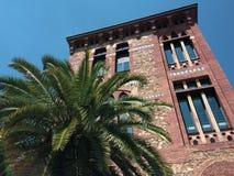 在棕榈树附近的房子 免版税图库摄影
