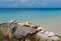 在棕榈树,理想的节假日背景的壳 图库摄影
