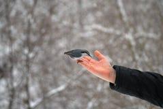 在棕榈的一只鸟 免版税库存照片