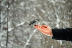 在棕榈的一只鸟 免版税库存图片