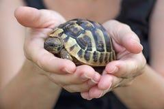 在棕榈的乌龟 图库摄影