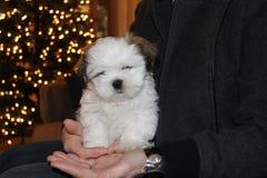 在棕榈的小狗 免版税库存图片