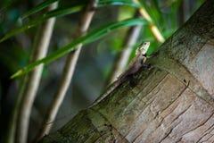 在棕榈的小蜥蜴 库存图片