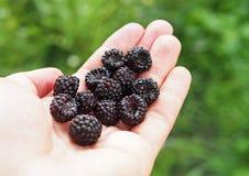 在棕榈的庭院黑莓 免版税库存图片