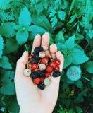 在棕榈的有用的莓果在绿色背景  o 免版税库存图片
