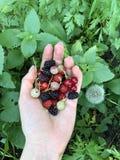 在棕榈的有用的莓果在绿色背景  o 库存照片
