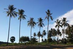 在棕榈的看法在海滩在阳光下 图库摄影