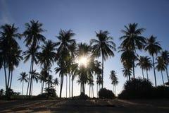 在棕榈的看法在海滩在阳光下 免版税库存照片