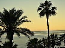 在棕榈的看法 免版税图库摄影