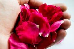 在棕榈的红色玫瑰花瓣 免版税库存照片