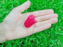在棕榈的莓反对草背景在夏天 库存照片