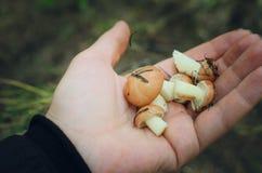 在棕榈的蘑菇 图库摄影