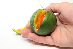 在棕榈的西瓜 库存图片