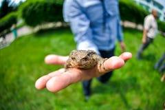 在棕榈的青蛙 图库摄影