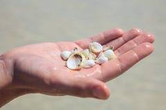 在棕榈的贝壳 免版税库存照片