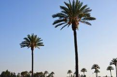 在棕榈的Sunsetting天空在帕萨迪纳 免版税库存照片