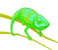 在棕色分支的绿色变色蜥蜴 免版税库存图片