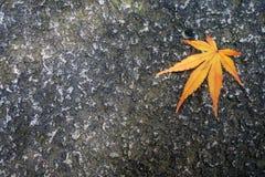 在棕色地面的充分的秋叶黄色在秋天 免版税库存图片