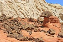 在棕色岩石中的伞菌 库存照片