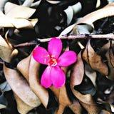 在棕色干燥叶子的一朵美丽的花 库存图片