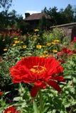 在棕色房子前面的红色花 免版税库存图片