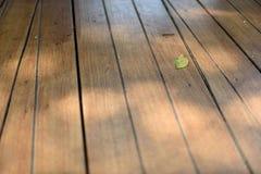 在棕色木地板上的一片小绿色叶子与阳光 库存图片