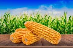 在棕色木地板上隔绝的干玉米有麦地背景 图库摄影