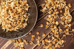 在棕色木头的扁豆新芽 免版税库存图片