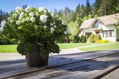 在棕色木桌上的柔和的花在庭院和房子被弄脏的背景中  库存图片
