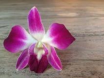 在棕色木桌上的紫色和白色兰花花 免版税库存照片