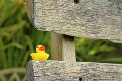 在棕色木头的黄色橡胶鸭子 免版税库存图片