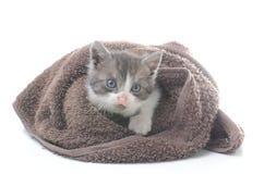 在棕色毛巾的逗人喜爱的小猫 免版税库存图片