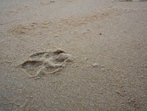 在棕色沙子海滩的狗脚印 库存图片
