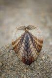 在棕色海滩沙子背景的贝壳 免版税库存图片