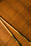 日本人在竹子的剁棍子 免版税库存图片