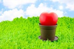 在棕色罐的红色心脏在与镶有钻石的旭日形首饰和蓝天的绿草 免版税库存图片