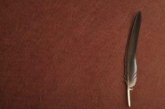 在棕色背景的一根羽毛 库存图片
