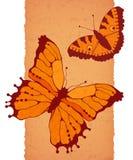 在棕色背景的传染媒介蝴蝶 库存照片