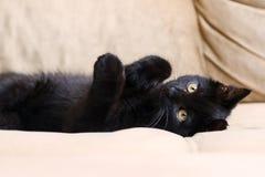 在棕色背景的小黑蓬松小猫 库存照片