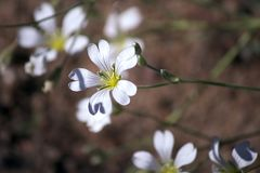 在棕色背景的特写镜头白花 免版税库存照片