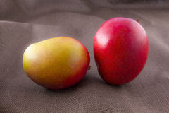 在棕色背景隔绝的芒果果子 库存照片