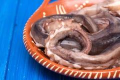在棕色陶器的未加工的章鱼在蓝色背景 库存图片