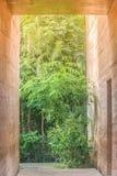 在棕色黏土墙壁旁边的具体走道有绿色自然本底 免版税库存图片