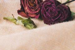 在棕色织地不很细背景的两朵玫瑰花 库存图片