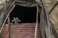 在棚子札格罗斯山的山羊 免版税库存图片