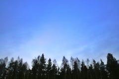 在森林上的天空 免版税库存图片