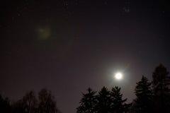 在森林上的月亮 免版税库存照片