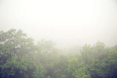 在森林上的有雾的早晨 免版税库存图片