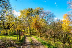 在森林下的农村庭院秋天在11月,斯洛伐克 库存图片